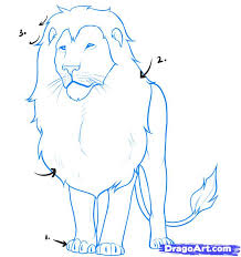 draw lion step step safari animals animals free