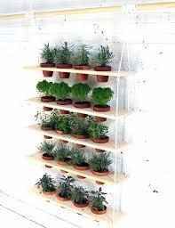 herbs indoors growing herbs indoors hanging herb garden fun and easy indoor herb