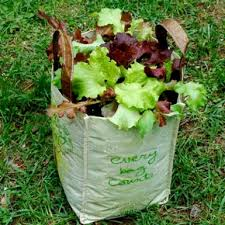 unique container vegetable gardening beginners container vegetable