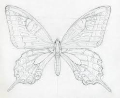 how to draw a butterfly surprisingly easy