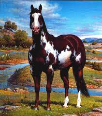 advanced horse color quiz proprofs quiz