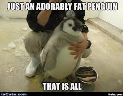 Penguin Meme Generator - cut fluffy fat penguin chick meme generator captionator caption
