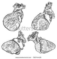 monochrome anatomic drawing skull without lower stock illustration