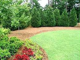 Backyards Ideas Landscape Privacy Landscaping Ideas Landscaping For Privacy Landscaping