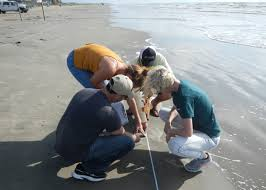 texas high coastal monitoring program thscmp bureau of