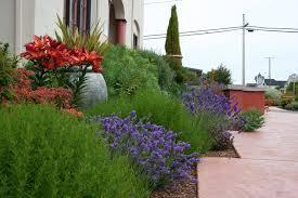 native plants in new zealand angelique lambermon design studio auckland new zealand benefits