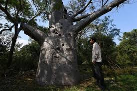 our trees of the hindu