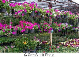 Flower Shop Interior Pictures Stock Image Of Flower Shop Interior Of A Flower Shop With Lots