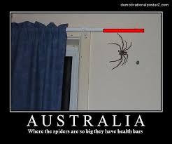 Huge Spider Memes Image Memes - 17 best giant spiders images on pinterest spider webs spiders