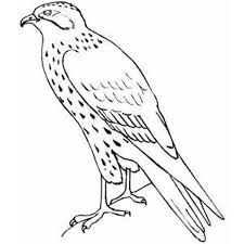 standing falcon bird coloring pages animal coloring pages