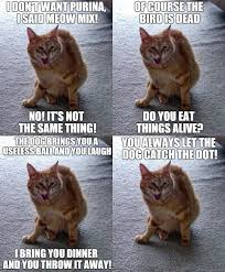 Angry Cat Meme - the idiots guide to cat moodiness cats kittens les chats