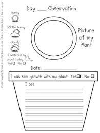 plant observation sheets george kindergarten pinterest