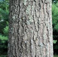 oak vs white oak hardwood flooring