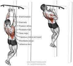 close neutral grip pull up a compound pull exercise muscles