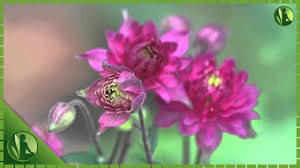 10 best hd 1080p flowers with world music for meditation and
