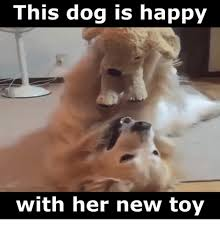 Toys Meme - 25 best memes about new toy new toy memes