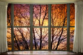 fall view through window trees and branches through a bay