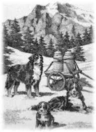 australian shepherd e bovaro del bernese casa san martino agriturismo città di castello berner snow