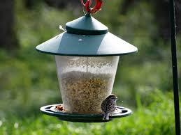 it u0027s bird month do you know your birds nebraskaland magazine