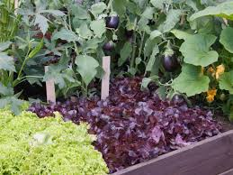Eggplant In Container Garden Should I Plant My Vegetable Garden In Raised Beds Hgtv
