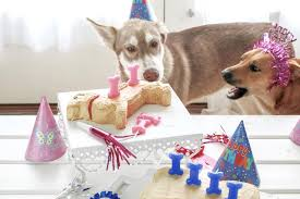 puppy party supplies pawsome doggie pet themed bakeware and birthday party supplies