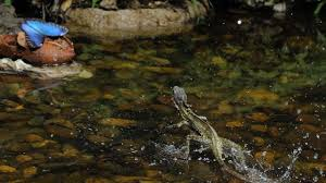 about animal impact show national geographic channel asia