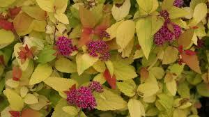 Flowering Shrubs For Partial Sun - 10 best plants for shade u2014 easy shade loving plants