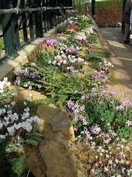 best 25 alpine garden ideas on pinterest rocks garden plants