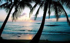 palm tree 1600x1198 u2013 hd widescreen picture