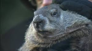 top ten facts about groundhogs top 10 facts life u0026 style