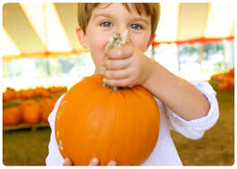 what to do in miami for halloween with the kids eloquence on the bay
