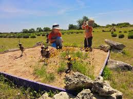 10th annual blanco lavender festival free fun in austin