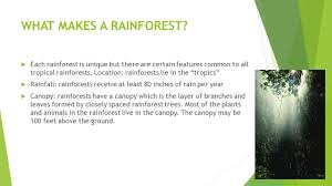 Above The Canopy by What Are Rainforests By Miss Rodriguez Ppt Video Online Download