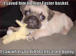 Easter Meme Funny - best funny easter memes and cute pics