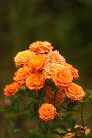 november flowers november flowers by docev1l on deviantart