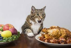 7 tips for a safe thanksgiving with your cat petmd