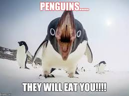 Penguin Meme Generator - image tagged in peguins angry penguin imgflip
