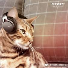 Gadgets For Pets 84 Best Pets Images On Pinterest Animals Pet Products And Pets