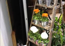 plant make your garden luxuries and beautiful with wooden