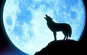 a blue moon and a wolf the lithium chronicles
