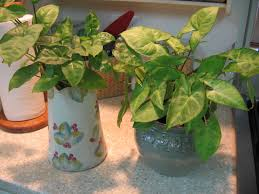 the stuff closet growing house plants in water