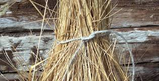 how to prune ornamental grass plants from the experts at wilson
