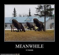Moose Meme - ideal canadian moose meme let s all laugh our ass off page 2