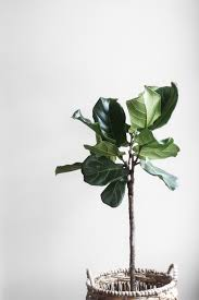 free images branch leaf flower wall green produce botany