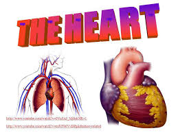 Heart Anatomy Youtube The Heart Ppt Video Online Download