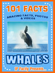 buy whales whale facts for kids whales gentle giants of the sea