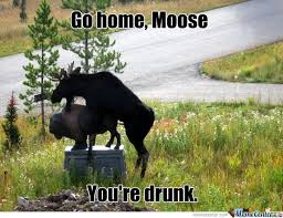 Moose Meme - moose by tophs2 meme center