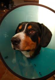 5 comfy alternatives to the dreaded cone of shame plus review of