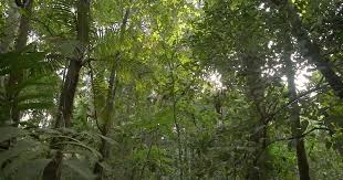 5 Dominant Plants In The Tropical Rainforest The Lungs Of The Planet Biographic