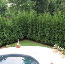 Good Backyard Trees by 8 Great Ideas For Backyard Landscaping Fast Growing Planting